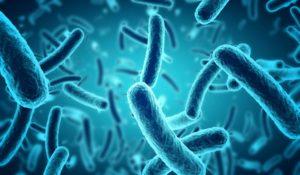 la-biotecnica-disinfestazioni-genova-16